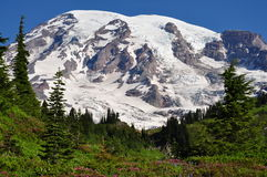 Mount Rainer. From an alpine meadow Royalty Free Stock Photography