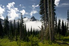 Mount Rainier Stock Image
