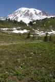 Mount Rainier royalty free stock photos