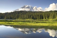 Mount Rainier Reflected Smooth Water Reflection La Royalty Free Stock Images