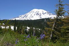Mount Rainier. National Park, Washington Stock Image