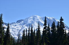 Mount Rainier in the background with evergreen trees. Mount Rainier in the background with evergreen pine trees in early summer, near Seattle, Washington, USA royalty free stock images