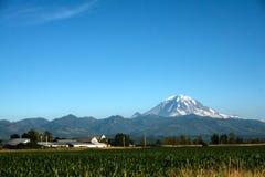 Mount Rainier and Cornfield. Mount Rainier towers over a rural cornfield near Auburn, Washington Stock Photo