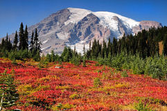 Mount Rainier fall colors Royalty Free Stock Images