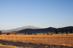 Mount Rainier and field Stock Photography