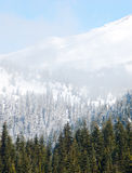 Mount Rainier forests and snow Royalty Free Stock Photos