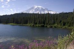 Mount Rainier Louise Lake Royalty Free Stock Images