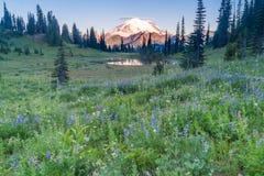 Mount Rainier Morning Sunrise Stock Images