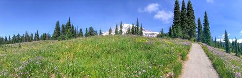 Mount Rainier National Park trail in summer season stock photos