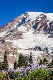 Mount Rainier Royalty Free Stock Photography