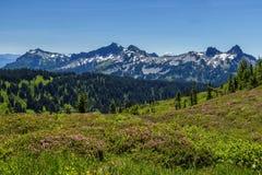 Mount Rainier National Park, Washington Stock Image