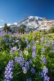 Mount Rainier och vildblommor royaltyfria foton