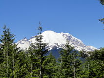 Mount Rainier Royaltyfri Foto