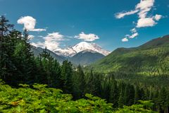 Mount Rainier in Summer Royalty Free Stock Photo