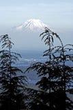 Mount Rainier till och med molnen och skogen arkivbild