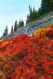 Mount Rainier, Washington Stock Photography