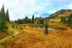 Mount Rainier, Washington Stock Photos