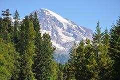 Mount Rainier royalty free stock images