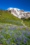 Mount Rainier and WIldflowers Stock Photo