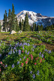 Mount Rainier and WIldflowers Stock Images