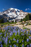Mount Rainier and WIldflowers Royalty Free Stock Images