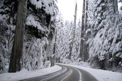Mount Rainier woods Royalty Free Stock Image