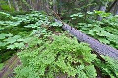 Mount Revelstoke National Park Stock Images