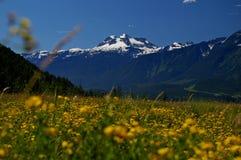 Mount Revelstoke Stock Image