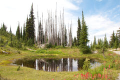 Mount Revelstoke Pond Stock Images