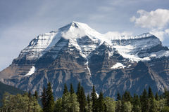 Mount Robson. Sunlit trees in front of snow covered Mount Robson near Jasper, Canada Royalty Free Stock Photography