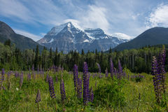 Mount Robson. The view of Mount Robson from the visitor center. Mount Robson Provincial Park Canada Royalty Free Stock Photo