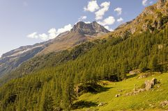 Panoramic view of a forest in the valley of Gressoney near Monte Rosa stock photography