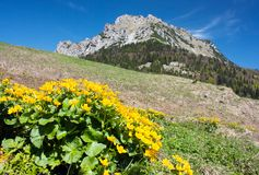 Mount Rozsutec with marigold Stock Photo