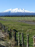 Mount Ruapehu. New Zealand snow capped mountain landscape featuring Mt Ruapehu stock images
