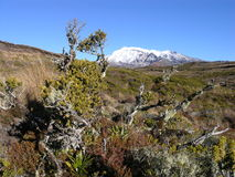 Mount Ruapehu Stock Photography