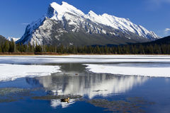 Mount Rundle Reflections Stock Photography