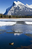 Mount Rundle Reflections Royalty Free Stock Image