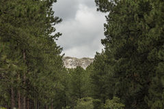 Mount Rushmore Forest View Royalty Free Stock Image