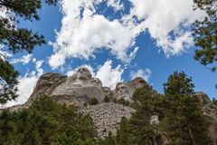 Mount Rushmore Framed By Pine Trees. Blue sky and white fluffy clouds provide a striking back drop for the carved faces of four famous United States Presidents royalty free stock photography