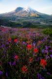 Mount Saint Helens fotos de stock royalty free