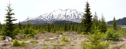 Mount Saint Helens Royalty Free Stock Photo