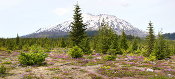 Mount Saint Helens Stock Images
