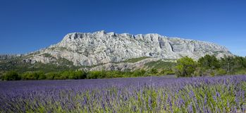 Free Mount Sainte Victoire And Lavender Stock Images - 99944184