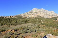 Free Mount Sainte Victoire And Olive Trees Stock Image - 115811061