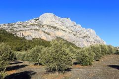 Free Mount Sainte Victoire And Olive Trees Royalty Free Stock Photos - 115811068