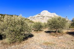 Free Mount Sainte Victoire And Olive Trees Royalty Free Stock Images - 115811069