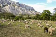 Free Mount Sainte Victoire And Sheep Royalty Free Stock Photography - 115810897