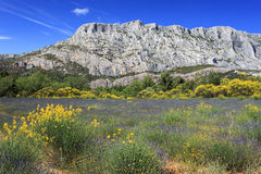 Mount Sainte Victoire and Flowers Stock Photo