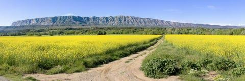 Mount Sainte Victoire and flowers Stock Photos
