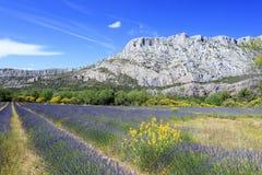 Mount Sainte Victoire and lavanders Royalty Free Stock Photo